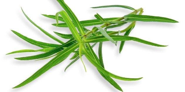 herb list - French-Tarragon