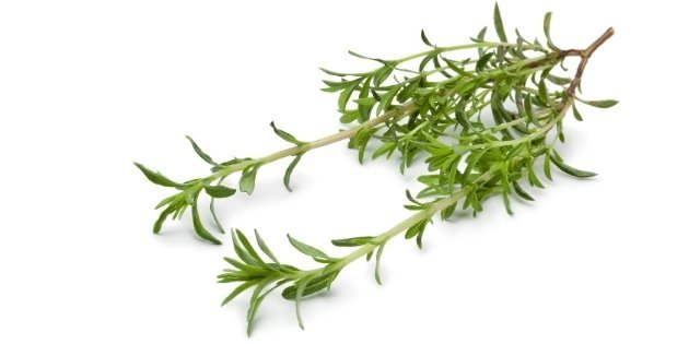 herbs list - Winter-Savory